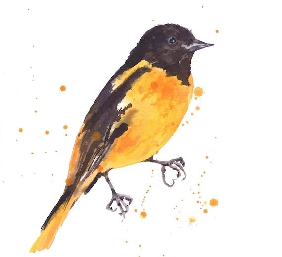 Watercolor BALTIMORE ORIOLE Print, yellow black, bird paintings, watercolor birds, Baltimore