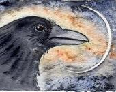 Spirit Crow