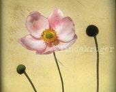 Wind flower -  giclee print