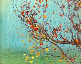Autumn - fine art pigment print