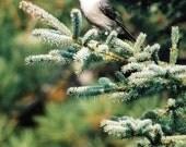 Chickadee (B2)