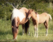 Camera Shy Assateague Island Foal and Her Mom 5 X 7 Fine Art Print