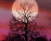 Moon of Seduction  9 X 12 FINE ART Print