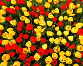 Spring Has Sprung - Original Fine Art Photograph 4x6