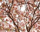 Magnolia Tree Love - Original Fine Art Photograph 5x7