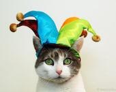Jester Kitty - 8x10 Photograph