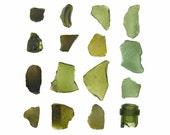 Olive Green Sea Glass - 12 x 12 beachcombing photograph - emerald beach glass