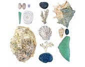 Fiji Beachcombing series No.8 - 8x8 photograph - giant clam, coral, scallop, spider conch, sea glass