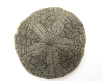 Single Sand Dollar - 20 x 20 extra large beachcombing photograph