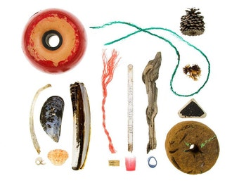 Beachcombing series No.58 - 12x12 beachcombing photograph - driftwood, fishing net buoy, crab shell, seaweed,, mussel shell