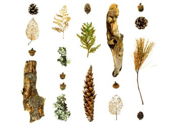 Woodland series No.2 - 8 x 8 photograph - pine cones, lichen, and branches from the Maine woods
