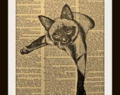 Art Print LOUNGING CAT 8x10 Dictionary Gold Gilded Vintage Page
