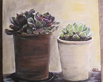 SALE-Succulents: In the sun