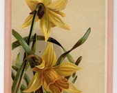 Victorian Trade Card - Piano And Organs - Daffodils - Late 1800's