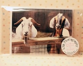 Goat Friends Blank Greeting Card And Envelope