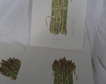 Set of 10 VINTAGE Litho Asparagus Botanical Prints to Frame or Collage