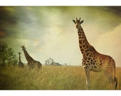 GIRAFFES- RESERVED FOR KRISTENMARIES