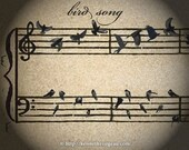 bird song - 11x14 Music Inspired Fantasy Animal Fine Art Print