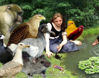 Pool Of Tears - 11x14 Alice In Wonderland Inspired Fantasy Collage Print