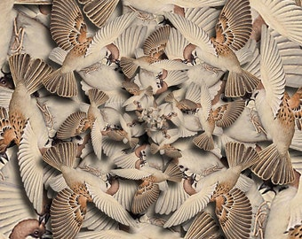 Forms Of Nature No. 15 - Surreal Birds Nature Digital Collage Art