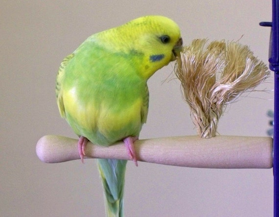 Parakeet Size Therapeutic Preening Perch - small bird toy - Natural