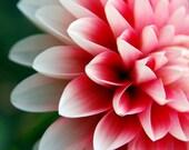 Just Because Sale - Dahlia Petals (5x7)