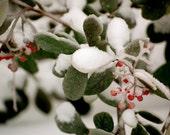 Winter Wonderland - Set of 5 Small Cards