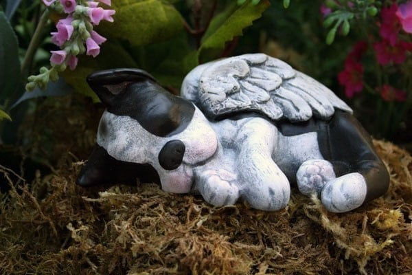 Boston Terrier Angel Dog Garden Statue Concrete Pet Memorial