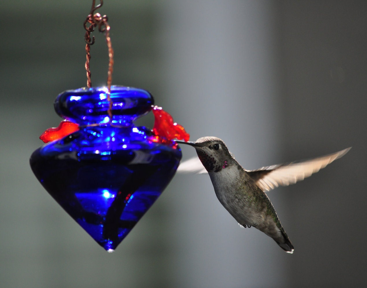 Recycled Material Hummingbird Feeder Cobalt Blue By