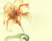 Day Lilly Original Watercolor Free Shipping