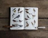 audubon bird guide eastern land birds