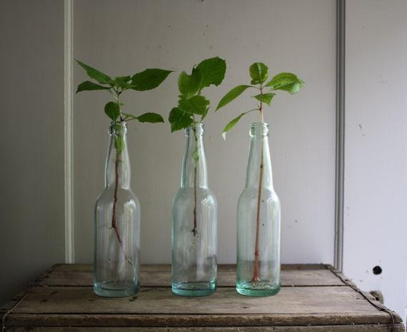 vintage glass soda or cola bottles