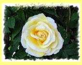 Stunning Yellow Rose Flower for broch, hair, clothing