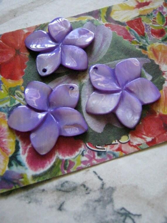 Shell Plumeria Flowers