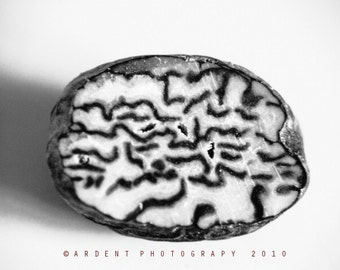 Abstract Nutmeg Black and White Food Photography Kitchen Wall Art Home Decor - Nutmeg a Fine Art Photograph
