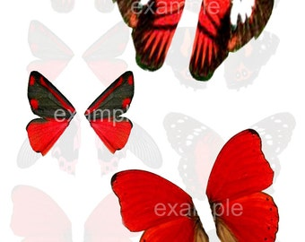 Red and Black Butterfly Wings Digital Collage Sheet