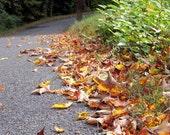 Middlebury Leaves - 5x7 Digital Print