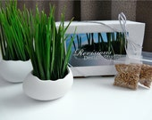 Porcelain Egg Planters, Wheat Grass Kit, Egg Sprouts Set of 2