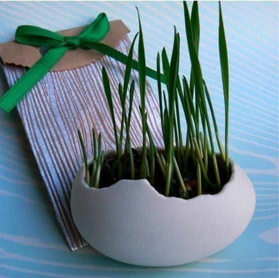 Egg Sprouts, Set of 2 Porcelain Egg Shells plus a packet of Wheatgrass Seeds, Grow your own place card settings.
