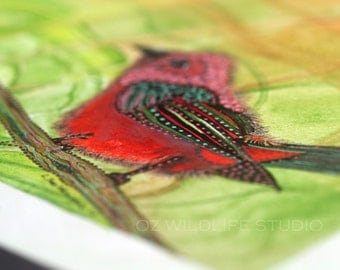Watercolour Bird Print - Spring Pond Reflections - 5 x 7 inch Unmatted