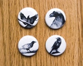 The Crows Button Set