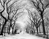 The Mall in Central Park New York - 8x12 Fine Art Infrared Photograph
