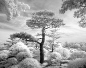 Japanese Garden at the Chicago Botanical Garden - 8x12 Fine Art Infrared Photograph