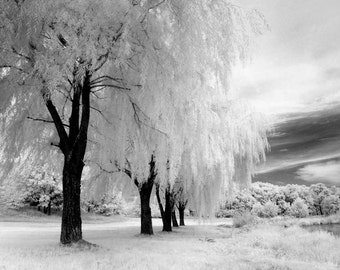 Lazy Summers Under the Weeping Willows - 8x12 Fine Art Infrared Photograph