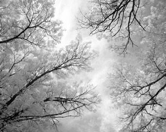 Morning Light - 8x12 Fine Art Infrared Photograph