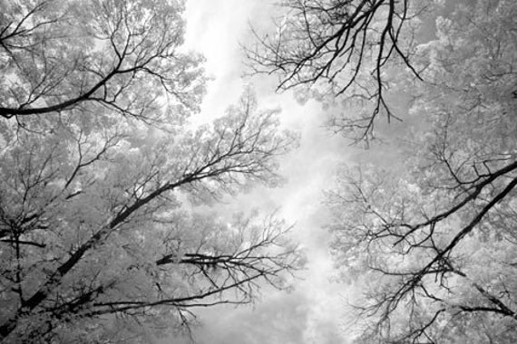 Morning Light - 8x12 Fine Art Infrared Photograph