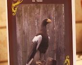 marine eagle greeting card