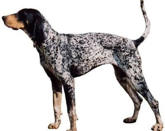 COONHOUND BLUE TICK Dog on Twelve Identical 6 inch Fabric Squares for Quilting and Sewing