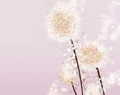 Dandelion Artwork - Perennial Moment (pink) - 8x10 Print - Modern Floral