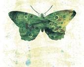 Butterfly Art - Jackie - Butterflies and Moths Series - 8x10